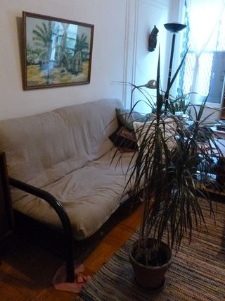 Dracaena_plant_small_potted_palm_tree
