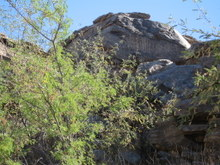 Arizona_indian_petroglyphs